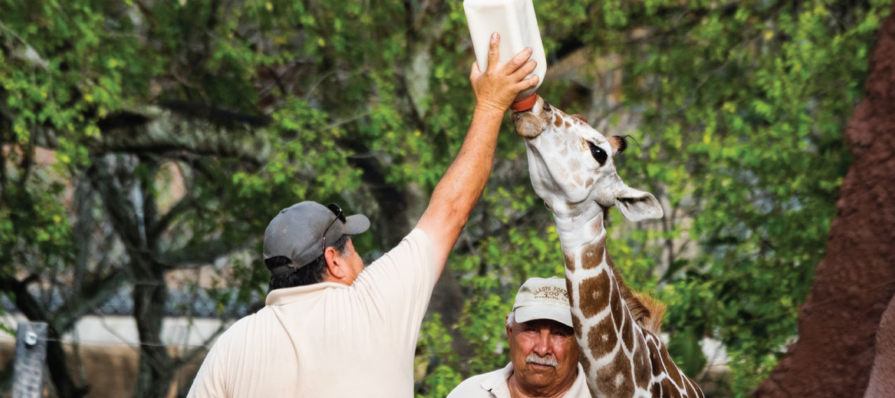 Baby_giraffe_bottle_1280x570