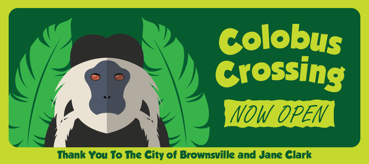 Colobus Crossing - NOW OPEN